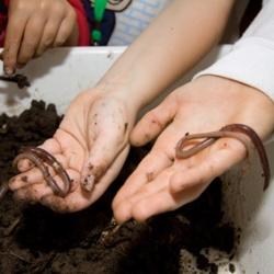 Regenwürmer auf der Hand von Kindern
