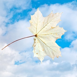 Herbstblatt vor Himmel