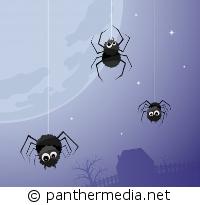 Drunter und Drüber im Spinnennetz